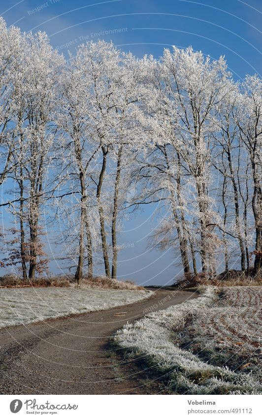 Field path with hoarfrost Winter Nature Landscape Cloudless sky Ice Frost Plant Tree Forest Cold Blue Brown White Lanes & trails Colour photo Exterior shot