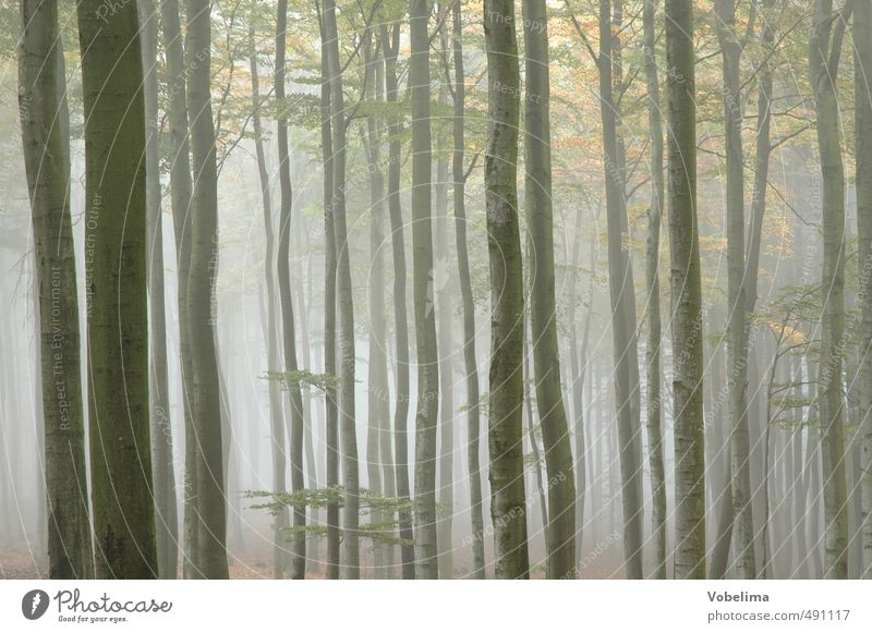 Morning fog in the forest Nature Landscape Air Autumn Weather Fog Plant Tree Forest Blue Brown Yellow To console Calm Hope Belief Sadness Grief Colour photo