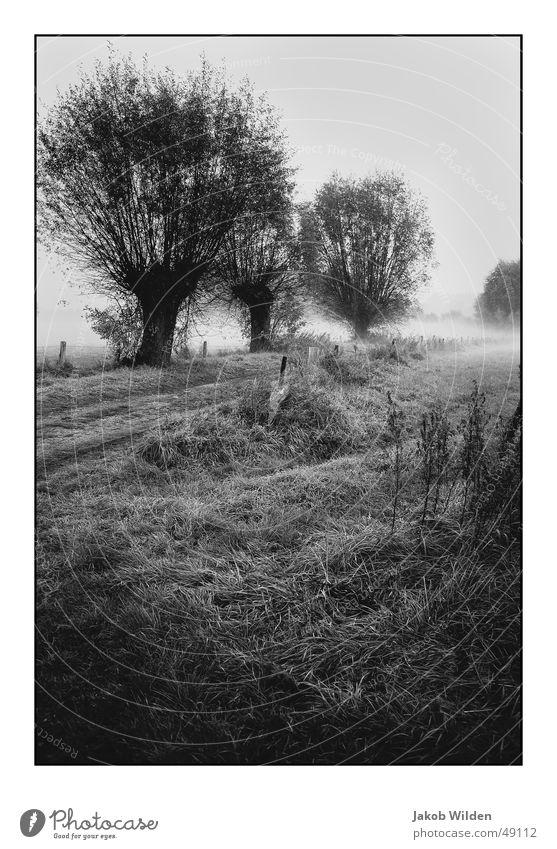 Colour Dark Cold Autumn Fog Rope Damp Digital photography Peaceful