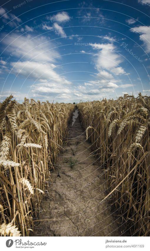 Sky Nature Plant Landscape Autumn Horizon Earth Agriculture Grain Harvest Agricultural crop Grain field