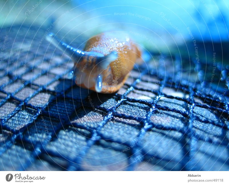 blue slug hour Slug Autumn Snail Blue Net Shadow