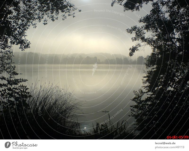 Sadness Lake Contentment Fog Harmonious God Perfect Deities Ambience Lake Baggersee