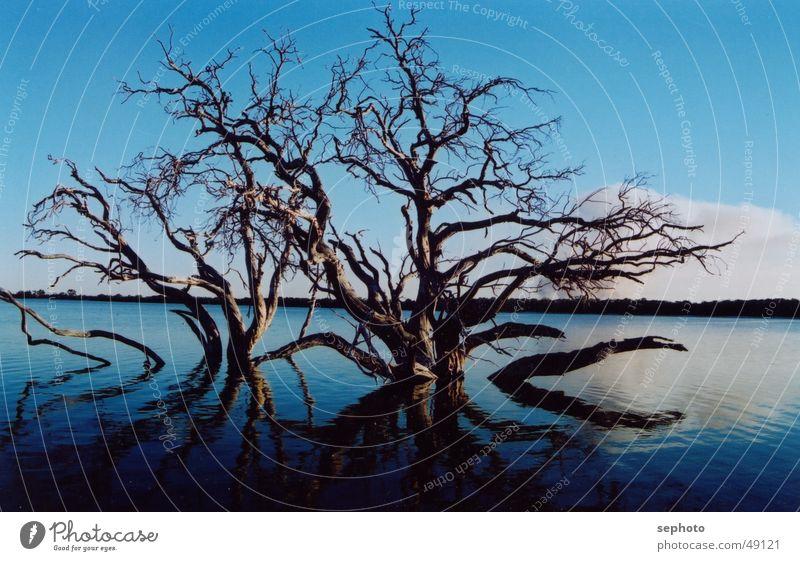 Sky Tree Blue Calm Dark Death Lake Mirror Smoothness Flat