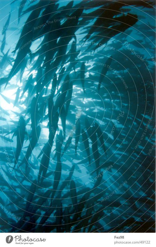 School of jackfish underwater red sea diving freedom underwater photography