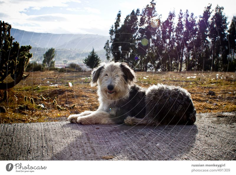 fluffy dog Tourism Summer Mountain Nature Animal Pet Dog 1 Adventure Ease Colour photo Exterior shot Deserted Copy Space top Day Central perspective