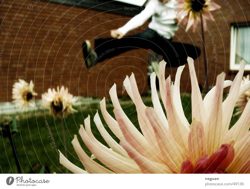 kung fu flowers Flying