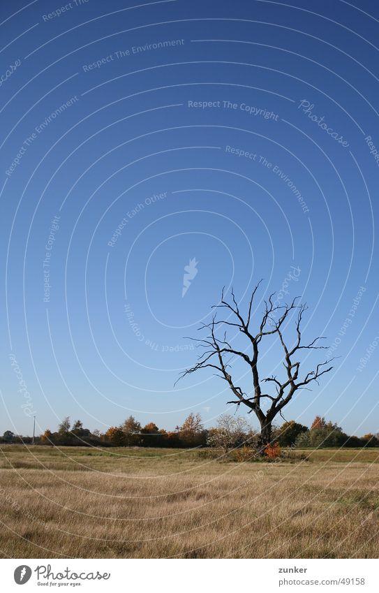 skeleton Tree Autumn Grass Death Sky Twig Branch Landscape Blue
