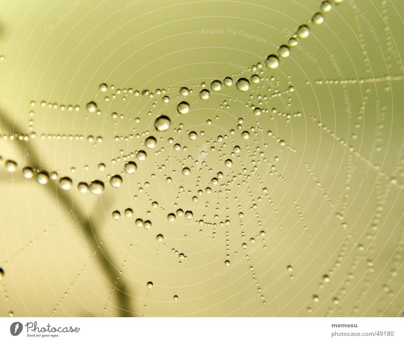 Autumn Drops of water Rope Net Spider's web