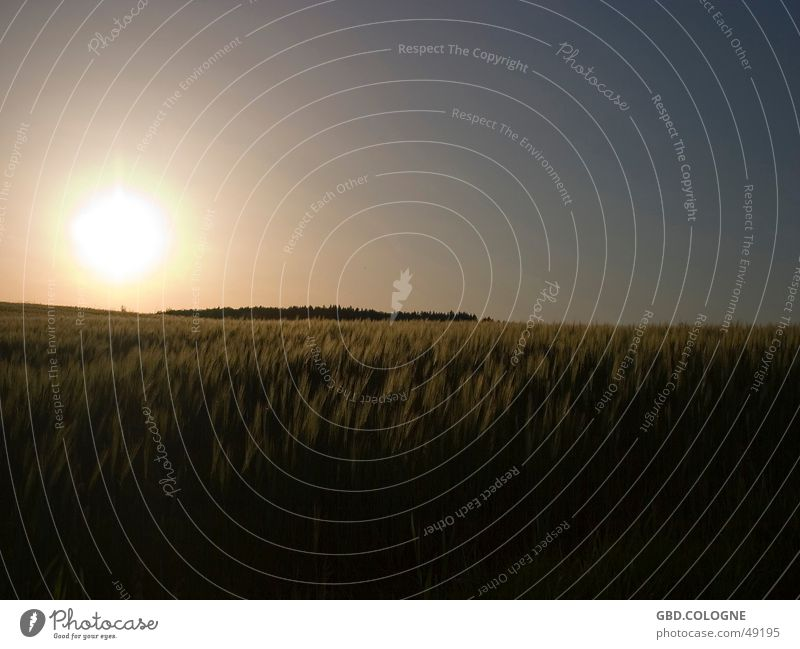 Sky Nature Vacation & Travel Sun Black Relaxation Freedom Horizon Natural Field Infinity Dusk Cloudless sky Cornfield Grain field