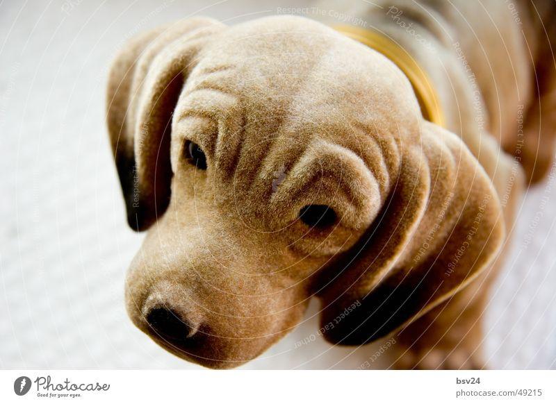 Animal Dog Brown Sweet Dachshund