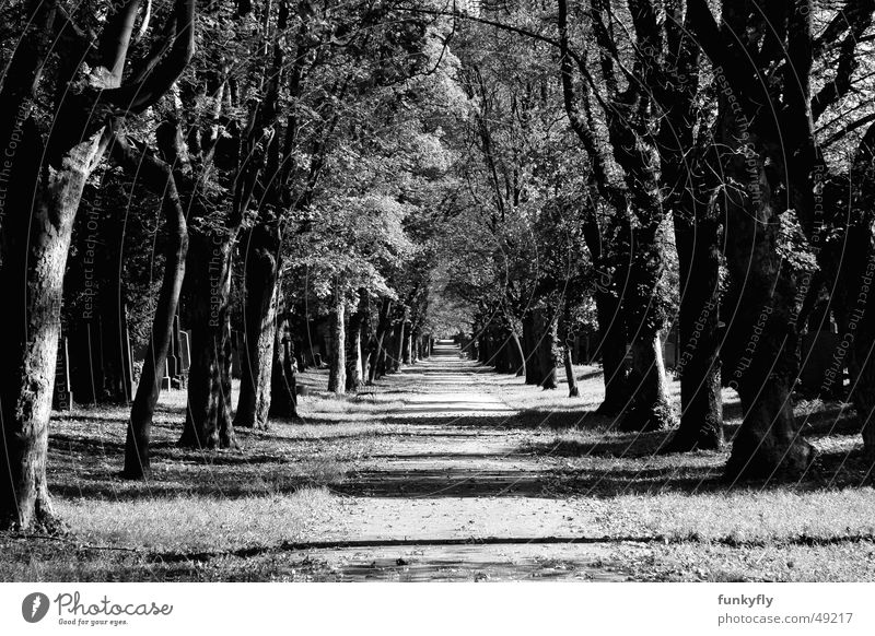 Heaven straight ahead Avenue Tunnel Park black white Black & white photo 20D cemetery graveyard cryptic mysterious autumn To fall spooky trees eternity road