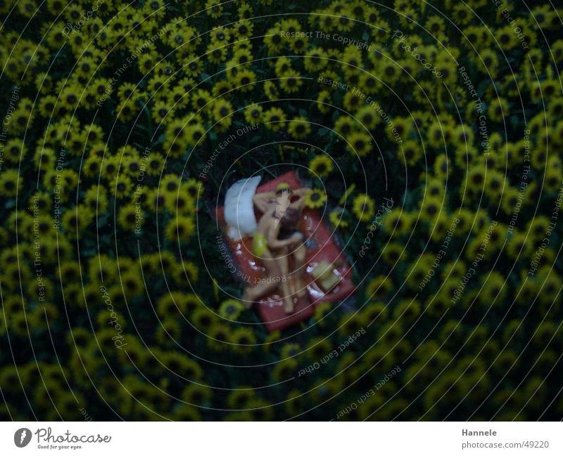 Woman Man Summer Joy Love Meadow Couple Landscape Field Romance Toys Cozy Picnic Caresses