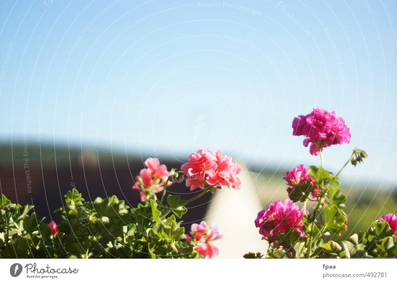 Sky Nature Blue Beautiful Plant Summer Sun Landscape Flower Animal Environment Natural Healthy Garden Air Pink