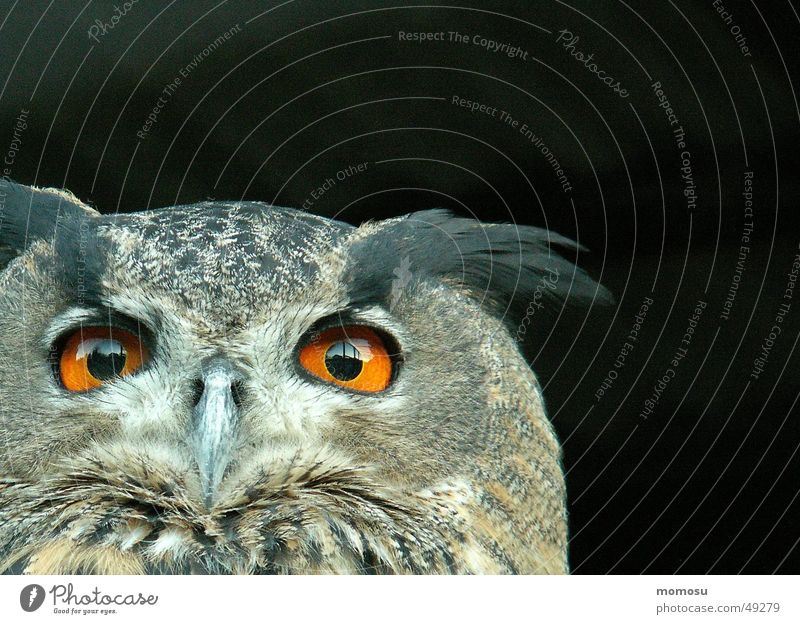 Eyes Bird Feather Adhesive Bird of prey