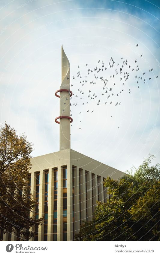 Central Mosque Cologne Architecture Culture Clouds Tree Cologne-Ehrenfeld Minaret Pigeon Flock Flying Esthetic Authentic Exotic Modern Original Acceptance
