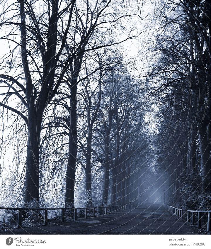 Blue second Tree Fog Morning Wood Creepy Treetop Tar Dawn colored Lanes & trails Handrail Deep Gravel