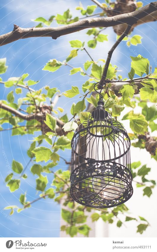 Get me out of the cage Environment Nature Plant Sky Clouds Sunlight Summer Beautiful weather Warmth Tree Leaf Branch Twig Garden Park Cage Bird's cage