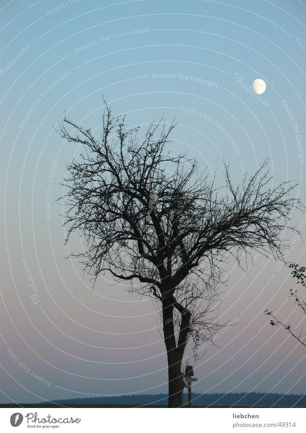 Sky Tree Moon
