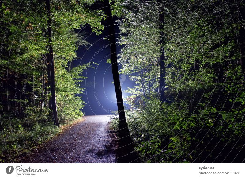 night vision Adventure Hiking Environment Nature Landscape Summer Flower Forest Uniqueness Discover Experience Expectation Exotic Threat Mysterious Belief