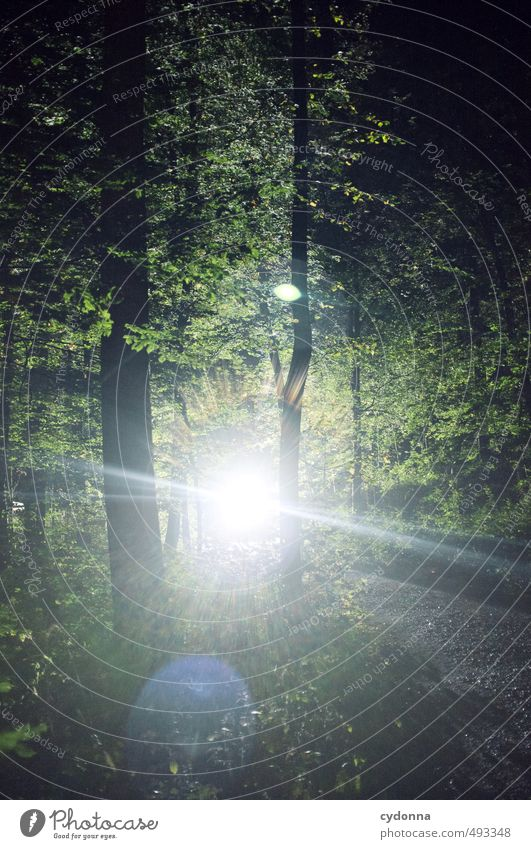 light appearance Calm Adventure Hiking Environment Nature Landscape Summer Tree Forest Uniqueness Energy Discover Expectation Mysterious Belief