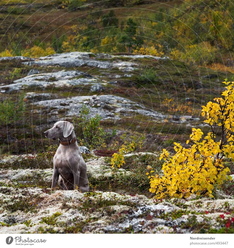 observantly Life Hiking Autumn Forest Rock Mountain Dog Observe Fitness Hunting Esthetic Muscular Multicoloured Passion Love of animals Watchfulness Caution