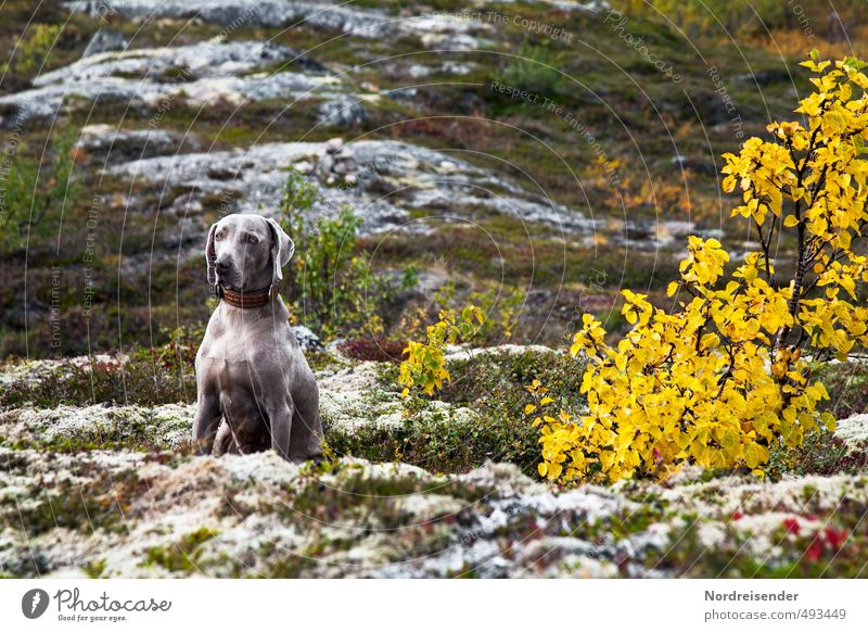 on the way Hunting Trip Adventure Mountain Hiking Nature Landscape Plant Animal Autumn Climate Tree Grass Rock Dog Crouch Sit Wait Trust Attentive Watchfulness