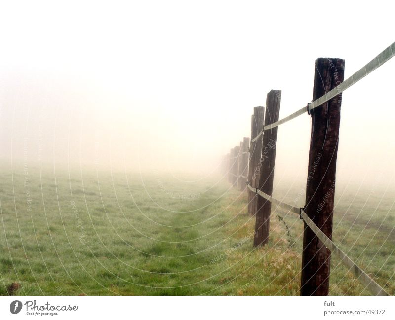 fence without end Fence Wood Pole Meadow Grass Fog Morning Railroad tie Side by side Rope Row