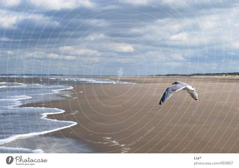 Seagull flies on the beach Sand Water Sky Clouds Waves North Sea Ocean Animal Bird Grand piano 1 Flying Free Blue Calm Relaxation Freedom Far-off places