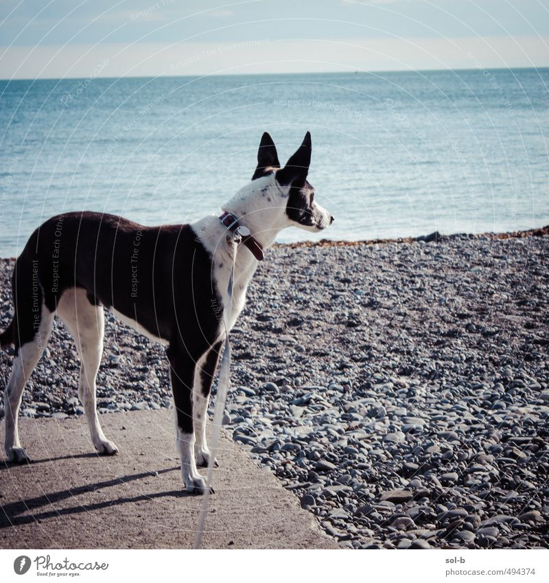 killiney beach Environment Nature Water Sky Beautiful weather Coast Ocean Animal Pet Dog Greyhound 1 Observe Listening Fresh Healthy Natural Love of animals