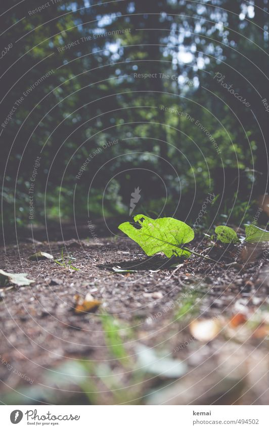 Touch the ground Environment Nature Plant Earth Sun Sunlight Summer Autumn Beautiful weather Tree Leaf Foliage plant Forest Lanes & trails Illuminate Bright