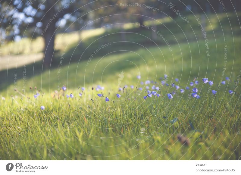 Think back, breathe a sigh of relief Environment Nature Landscape Plant Summer Autumn Beautiful weather Warmth Tree Flower Grass Blossom Foliage plant