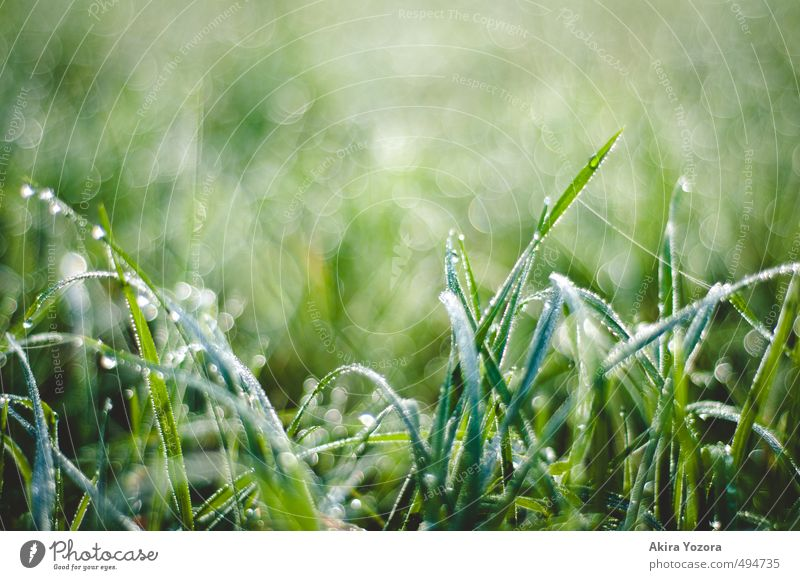 pearl grass Nature Drops of water Autumn Grass Meadow Touch Glittering Cold Wet Natural Green Black White Beginning Hoar frost Colour photo Exterior shot Detail