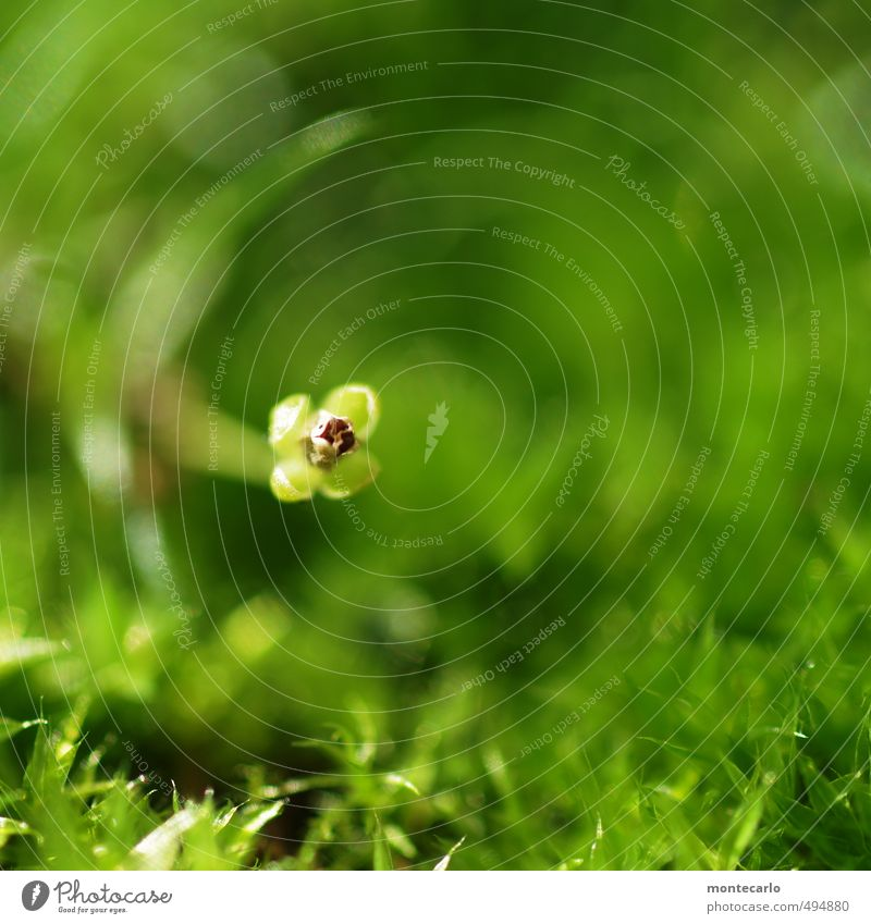 party photo Environment Nature Plant Autumn Grass Bushes Leaf Blossom Foliage plant Wild plant Thin Authentic Simple Fresh Small Soft Green Colour photo