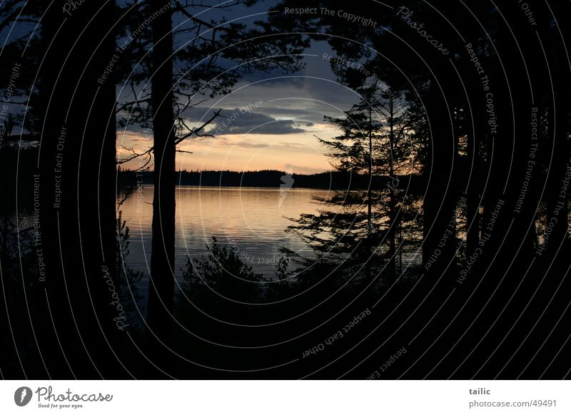 Sunset in Sweden Calm Freedom Nature Landscape Water Clouds Tree Forest Coast Lake Dark Infinity Romance reflection Colour photo Exterior shot Deserted Evening