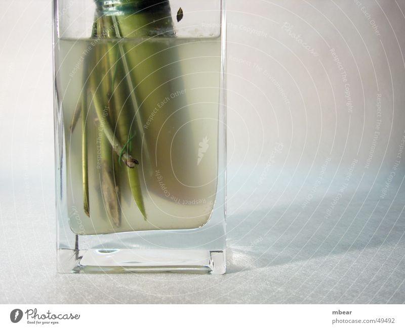 Water Flower Green Plant Stalk Transparent Aquarium Vase Dreary