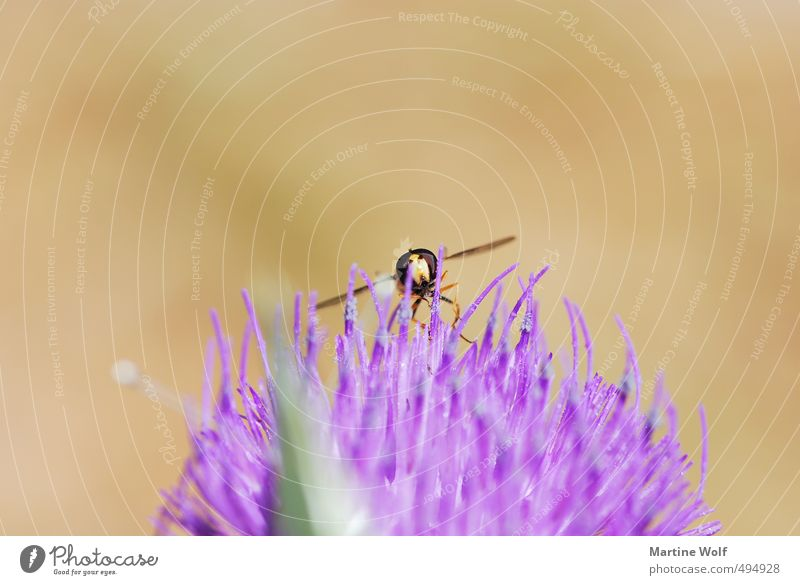 Landing in rough terrain Nature Animal Italy Calabria Europe Bee 1 Flying Parco Nazionale dell Aspromonte Wasps Sprinkle Colour photo Exterior shot