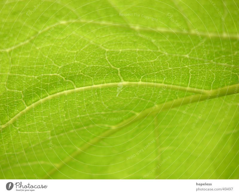 Lifelines? Leaf Plant Green Nature