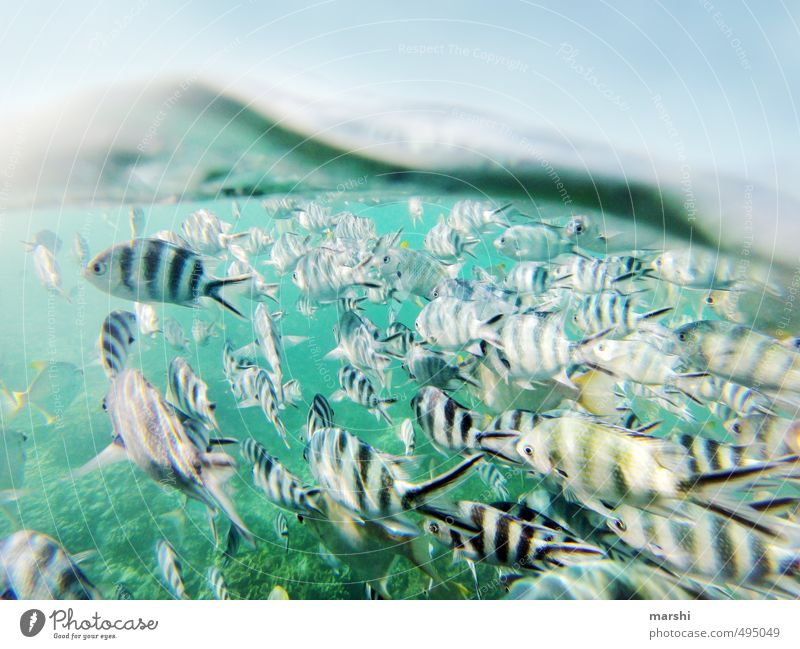 Two Worlds Aquatics Nature Landscape Plant Animal Summer Coast Reef Coral reef Ocean Wild animal Fish Group of animals Flock Blue Shoal of fish