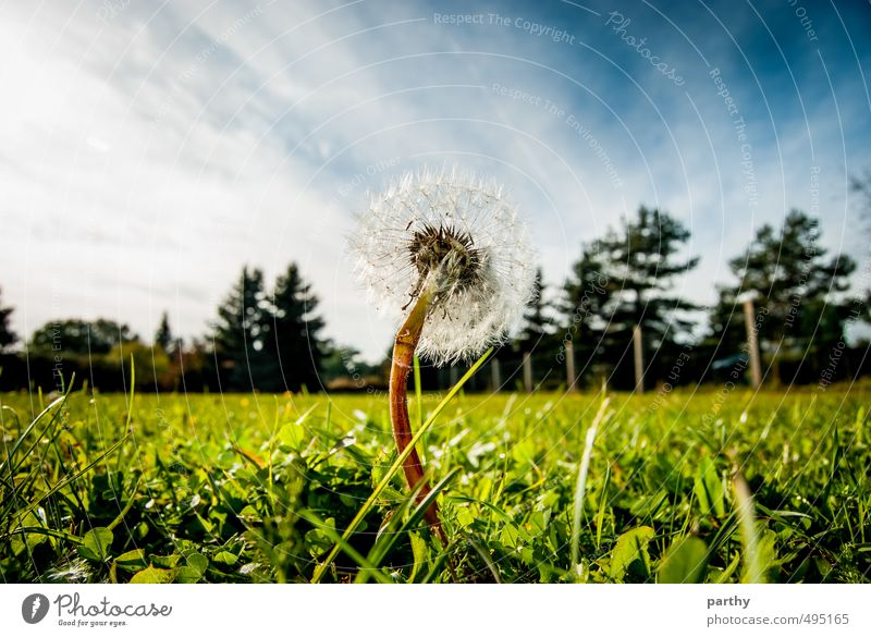 Sky Nature Blue Green White Plant Tree Flower Clouds Far-off places Forest Environment Meadow Grass Garden Brown