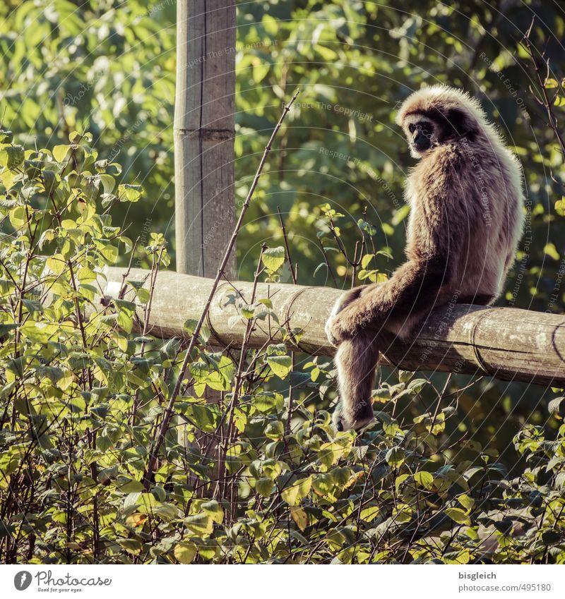 Green Animal Brown Sit Wild animal Monkeys