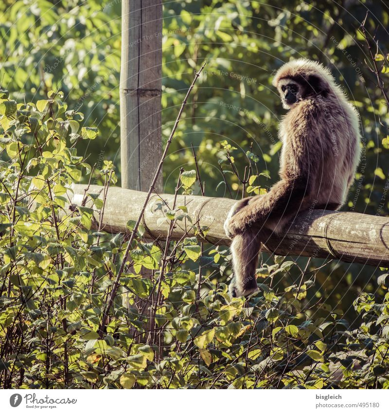 Look at that! Wild animal Monkeys 1 Animal Looking Sit Brown Green Colour photo Exterior shot Day