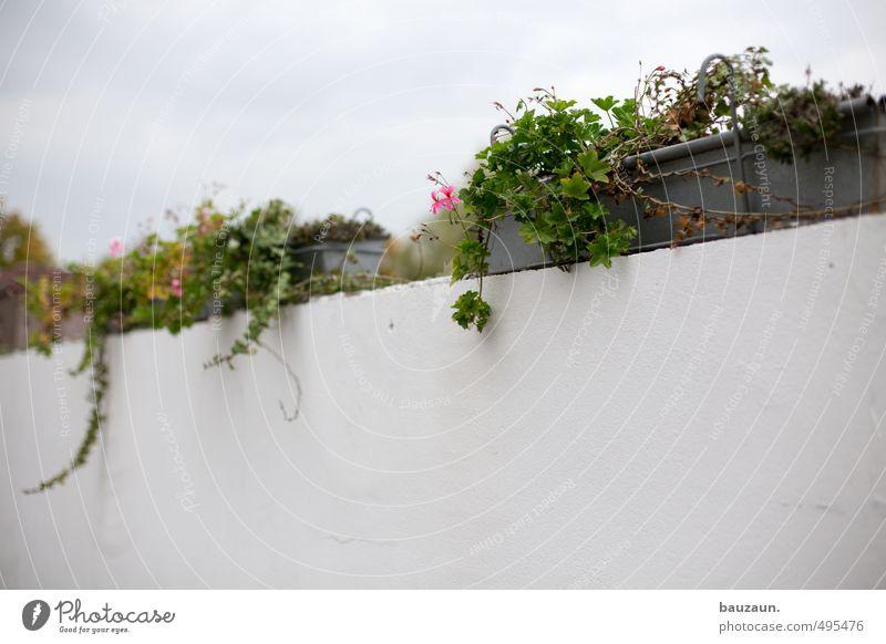150 | . Garden Gardening Plant Flower Leaf Blossom Geranium Industrial plant Park Places Wall (barrier) Wall (building) Lanes & trails Stone Concrete Metal
