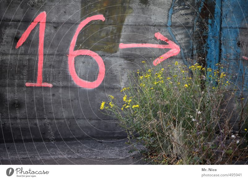 16 --> Environment Plant Bushes Wall (barrier) Wall (building) Facade Pink Digits and numbers Arrow Weed Trend-setting Concrete wall Industrial district