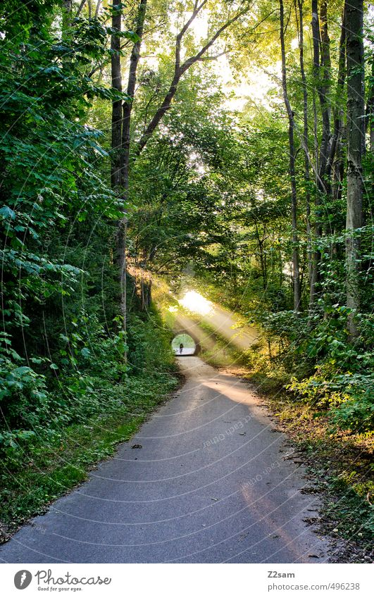 ..into the light! Cycling 1 Human being Environment Nature Landscape Sunrise Sunset Sunlight Summer Beautiful weather Tree Forest Fresh Sustainability Natural