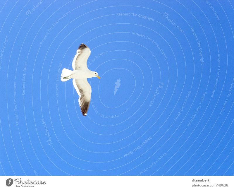 boundless Seagull White Peace Black Animal Bird Infinity Blue Nature Sky Flying Freedom