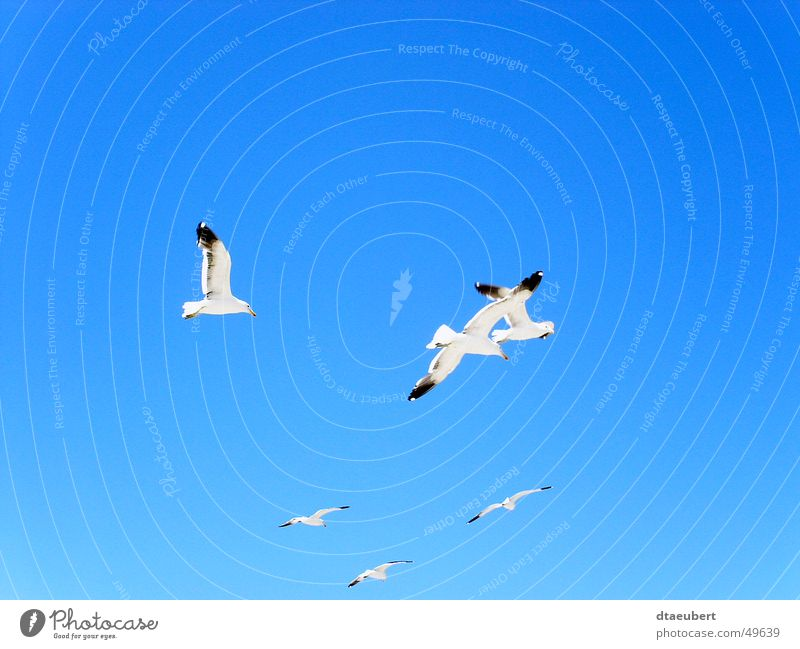Seagull Party White Peace Black Animal Bird Infinity Summer Blue Nature Sky Flying Freedom