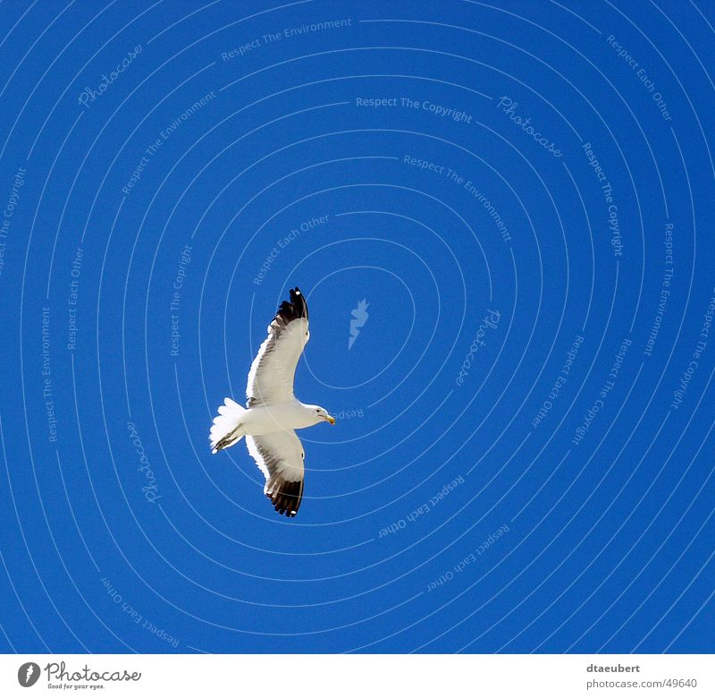 Nature Sky White Blue Summer Black Animal Above Freedom Bird Flying Peace Infinity Seagull