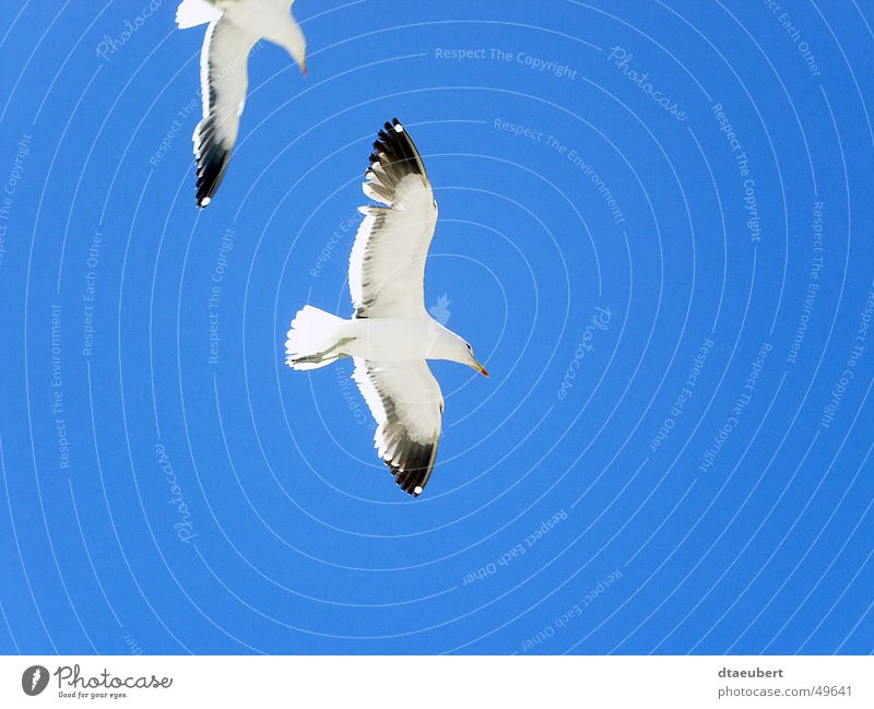 Nature Sky White Blue Summer Black Animal Freedom 2 Bird Flying Peace Infinity Seagull