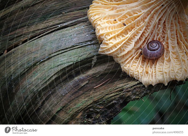 lifelines Environment Nature Elements Autumn Forest Snail 1 Animal Sign Power Safety Warm-heartedness Beautiful Responsibility Attentive Calm Mushroom Rachis