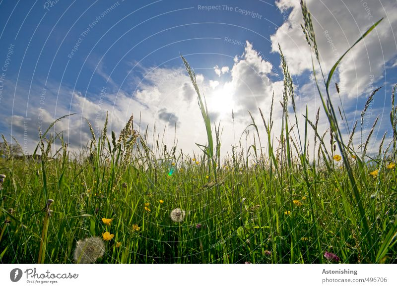 meadow Environment Nature Landscape Plant Elements Air Sky Clouds Horizon Sun Sunlight Summer Weather Beautiful weather Warmth Flower Grass Leaf Blossom